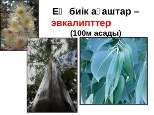 Ең биік ағаштар – эвкалипттер (100м асады)