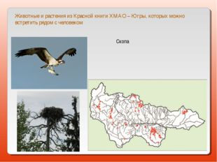 Животные и растения из Красной книги ХМАО – Югры, которых можно встретить ряд