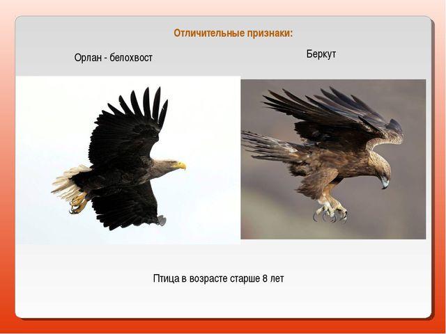 Орлан - белохвост Беркут Птица в возрасте старше 8 лет Отличительные признаки: