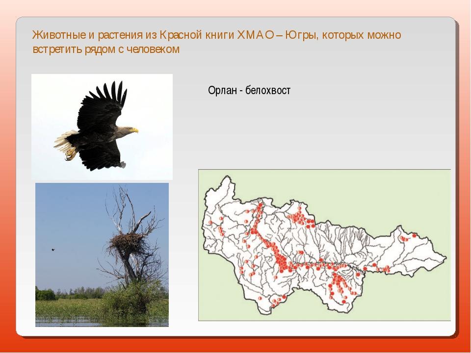 Животные и растения из Красной книги ХМАО – Югры, которых можно встретить ряд...