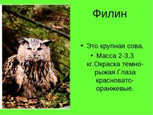 Филин Это крупная сова. Масса 2-3,3 кг.Окраска темно-рыжая.Глаза красновато-