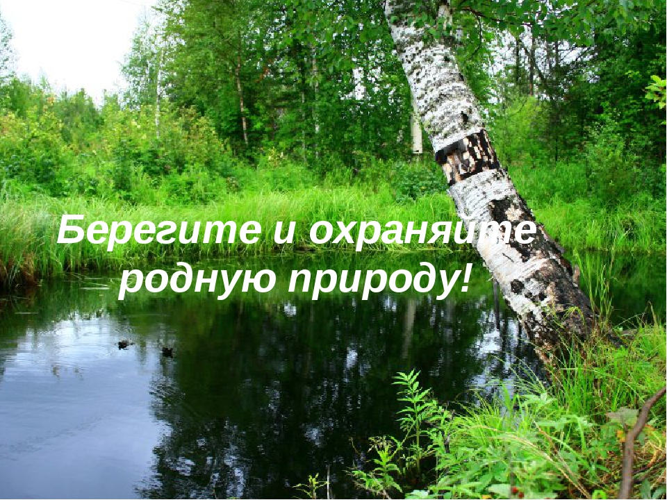картинки береги природа люби твоему сведению, чень