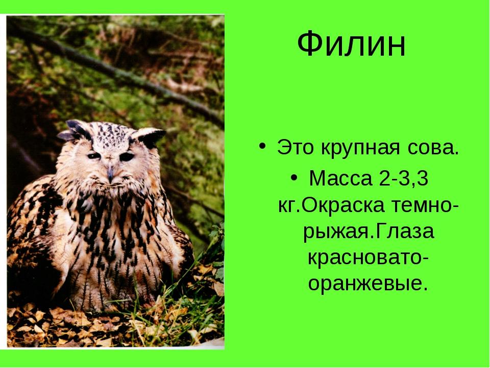 Филин Это крупная сова. Масса 2-3,3 кг.Окраска темно-рыжая.Глаза красновато-...