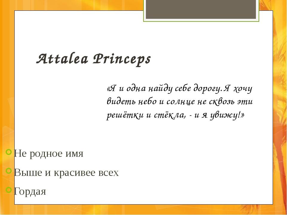Attalea Princeps Не родное имя Выше и красивее всех Гордая «Я и одна найду се...