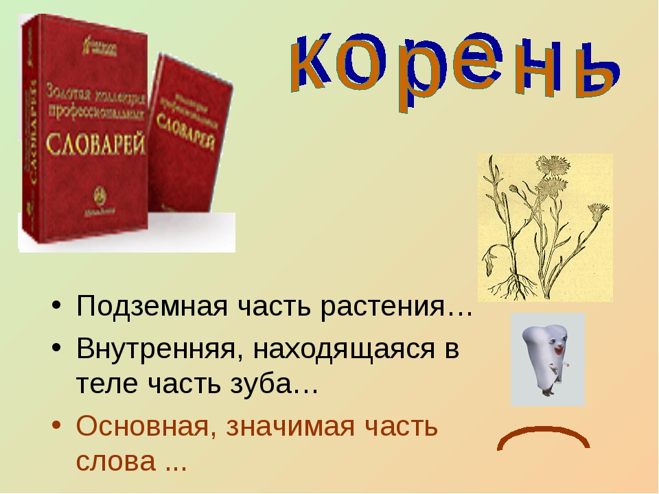 Подземная часть растения… Внутренняя, находящаяся в теле часть зуба… Основная...
