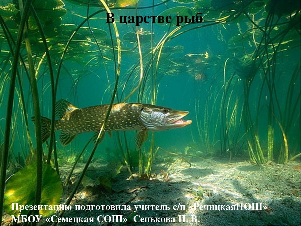 В царстве рыб Презентацию подготовила учитель с/п «РечицкаяНОШ» МБОУ «Семецк...