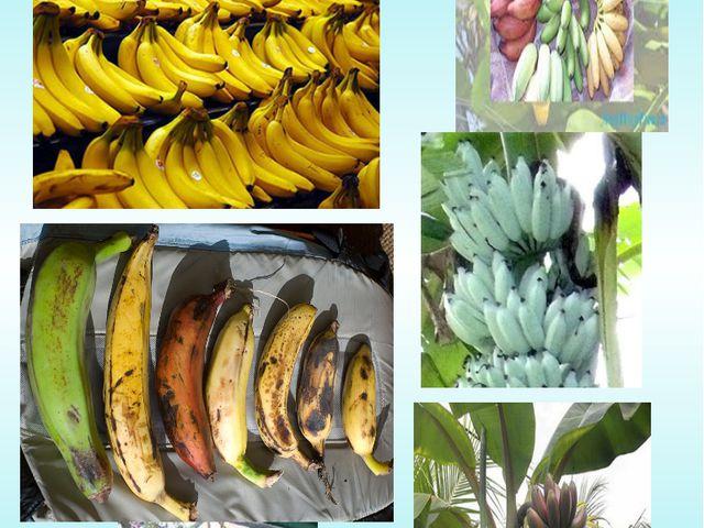 Банан жемісінің түстері