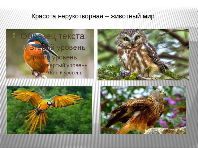Красота нерукотворная – животный мир