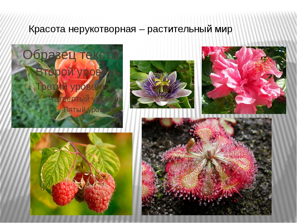 Красота нерукотворная – растительный мир