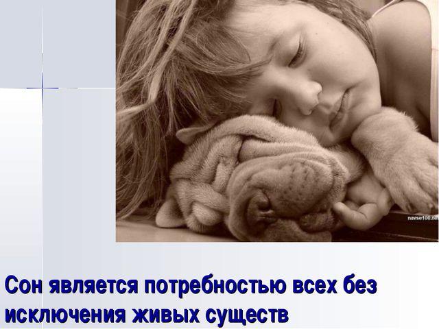 Сон является потребностью всех без исключения живых существ