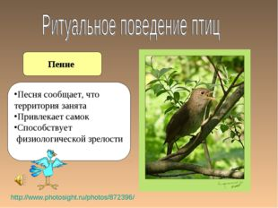 Пение http://www.photosight.ru/photos/872396/ Песня сообщает, что территория