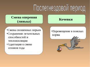 Смена оперения (линька) Кочевки Смена сношенных перьев Сохранение летательных