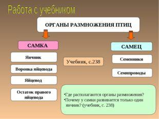 ОРГАНЫ РАЗМНОЖЕНИЯ ПТИЦ САМКА САМЕЦ Яичник Семенники Учебник, с.238 Воронка я