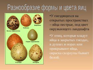 У гнездящихся на открытых пространствах – яйца пестрые, под цвет окружающего