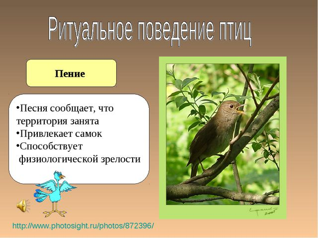 Пение http://www.photosight.ru/photos/872396/ Песня сообщает, что территория...