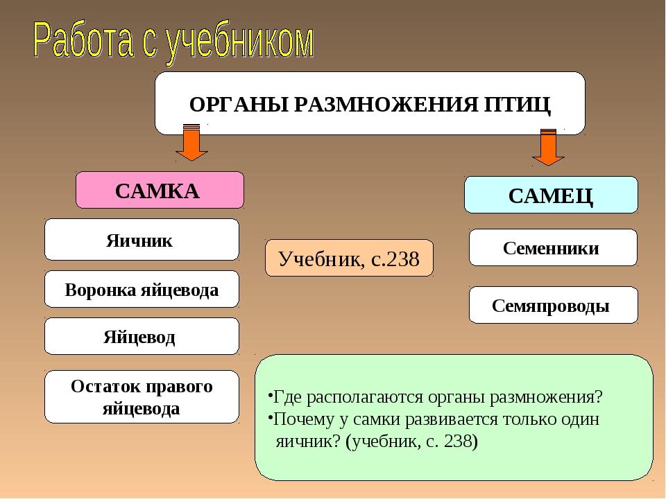 ОРГАНЫ РАЗМНОЖЕНИЯ ПТИЦ САМКА САМЕЦ Яичник Семенники Учебник, с.238 Воронка я...