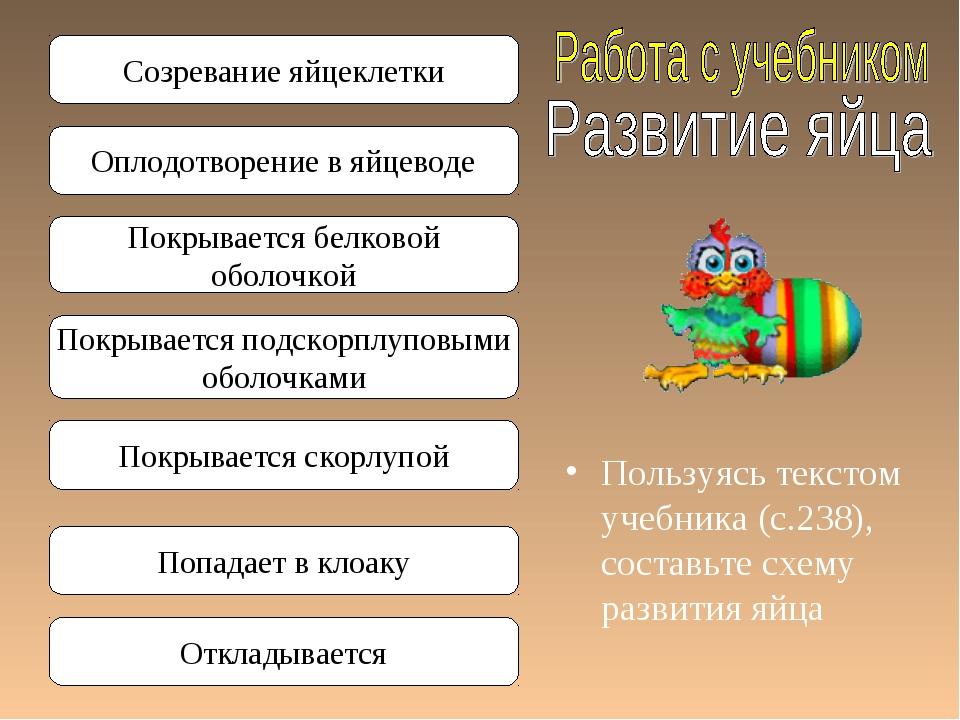 Пользуясь текстом учебника (с.238), составьте схему развития яйца Созревание...
