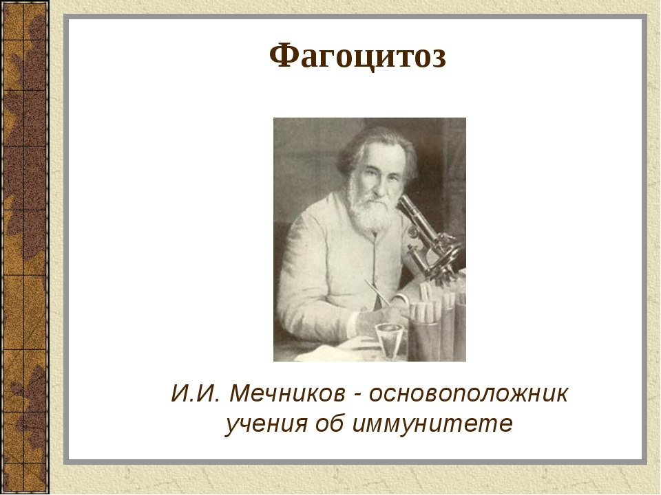 Фагоцитоз И.И. Мечников - основоположник учения об иммунитете