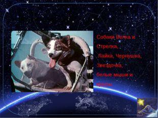 2. Какие животные побывали в космосе? Собаки Белка и Стрелка, Лайка, Чернушка