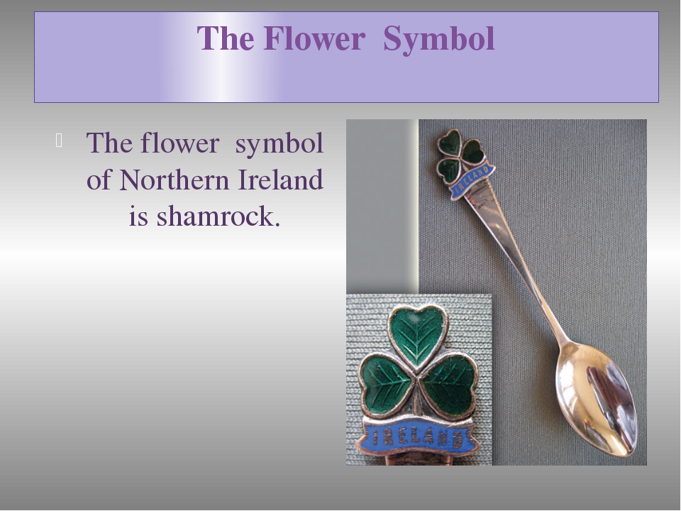 The Flower Symbol The flower symbol of Northern Ireland is shamrock.