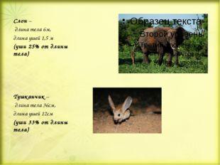 Слон – длина тела 6м, длина ушей 1,5 м (уши 25% от длины тела) Тушканчик – д