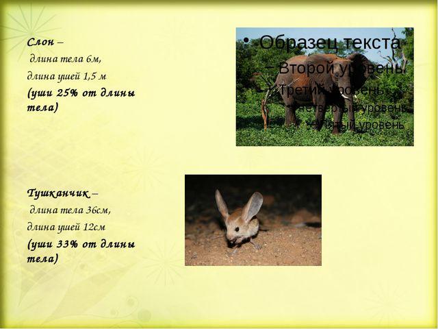 Слон – длина тела 6м, длина ушей 1,5 м (уши 25% от длины тела) Тушканчик – д...