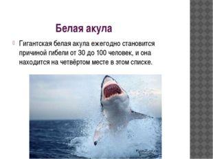 Белая акула Гигантская белая акула ежегодно становится причиной гибели от 30
