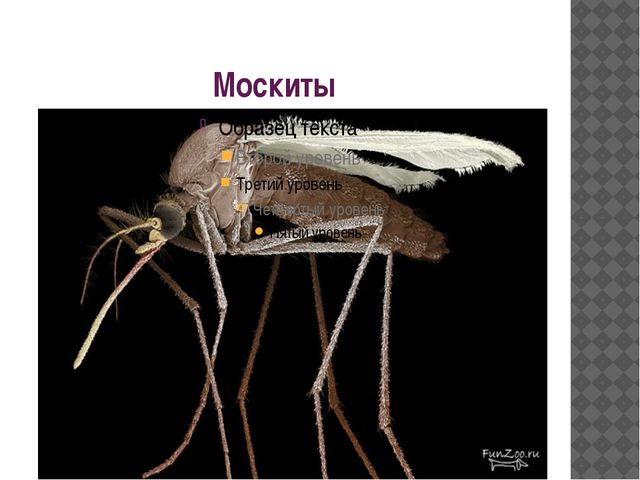 Москиты