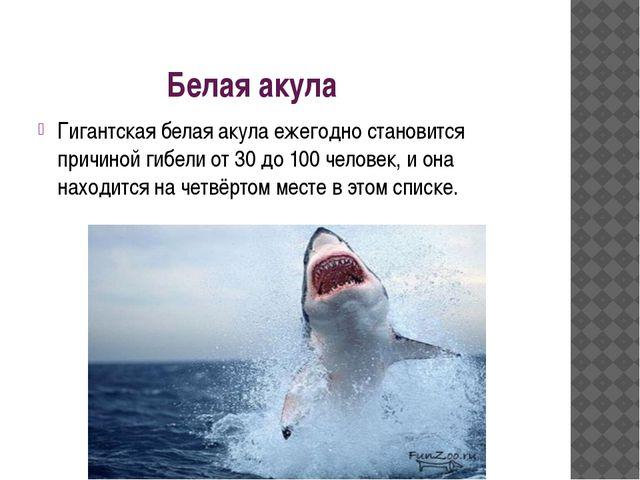 Белая акула Гигантская белая акула ежегодно становится причиной гибели от 30...
