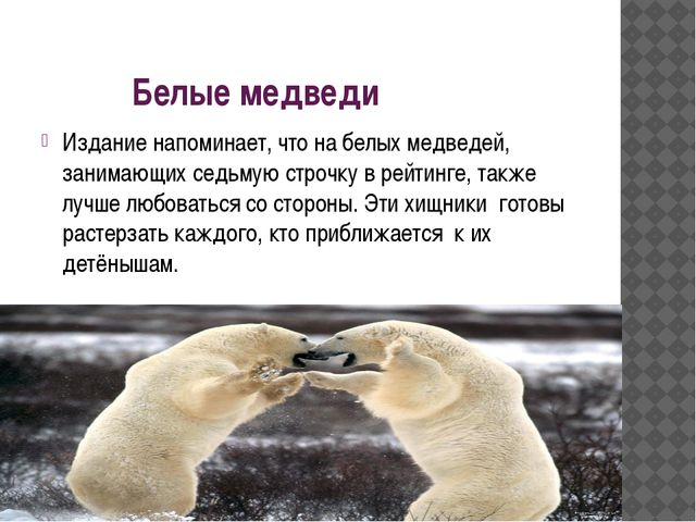 Белые медведи Издание напоминает, что на белых медведей, занимающих седьмую с...