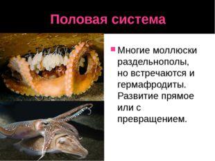 Половая система Многие моллюски раздельнополы, но встречаются и гермафродиты.