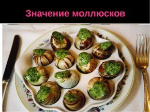 Значение моллюсков Раковины пресноводных жемчужниц с толщиной перламутрового