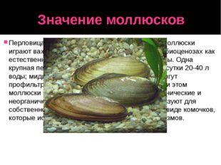 Значение моллюсков Перловица и некоторые другие двустворчатые моллюски играют