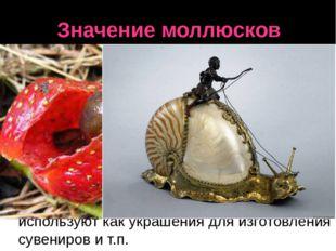 Значение моллюсков Голые слизни во влажных местах вредят культурным растениям