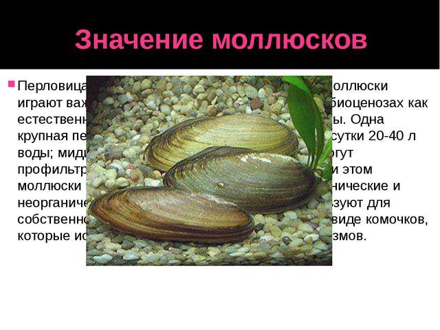Значение моллюсков Перловица и некоторые другие двустворчатые моллюски играют...