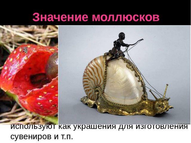 Значение моллюсков Голые слизни во влажных местах вредят культурным растениям...