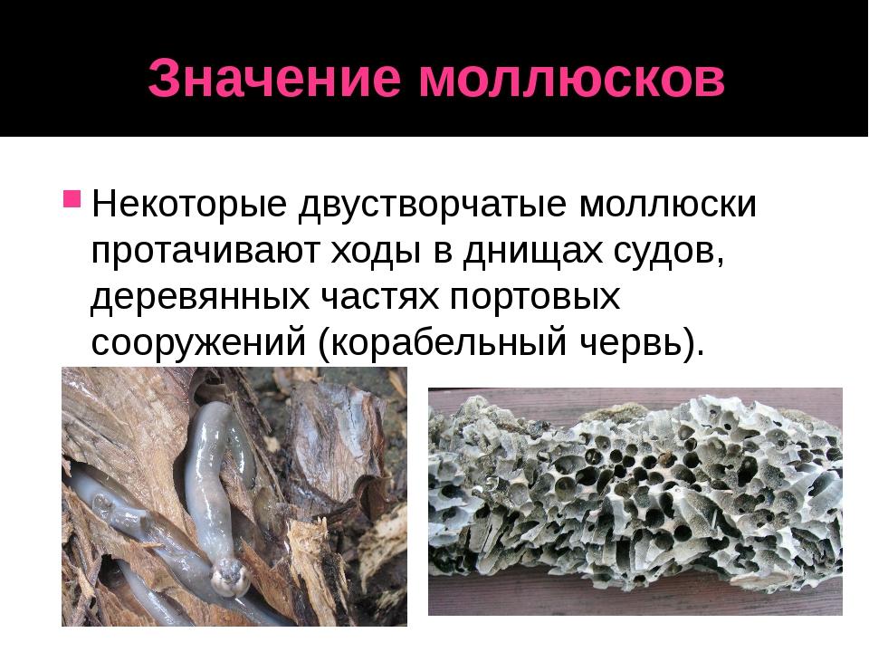 Значение моллюсков Некоторые двустворчатые моллюски протачивают ходы в днищах...
