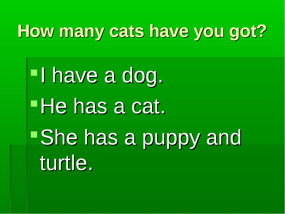 How many cats have you got? I have a dog. He has a cat. She has a puppy and t...