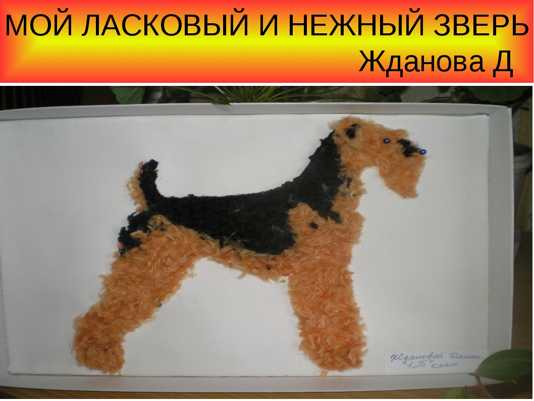 МОЙ ЛАСКОВЫЙ И НЕЖНЫЙ ЗВЕРЬ Жданова Д