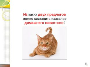 * 9 Из каких двух предлогов можно составить название домашнего животного?