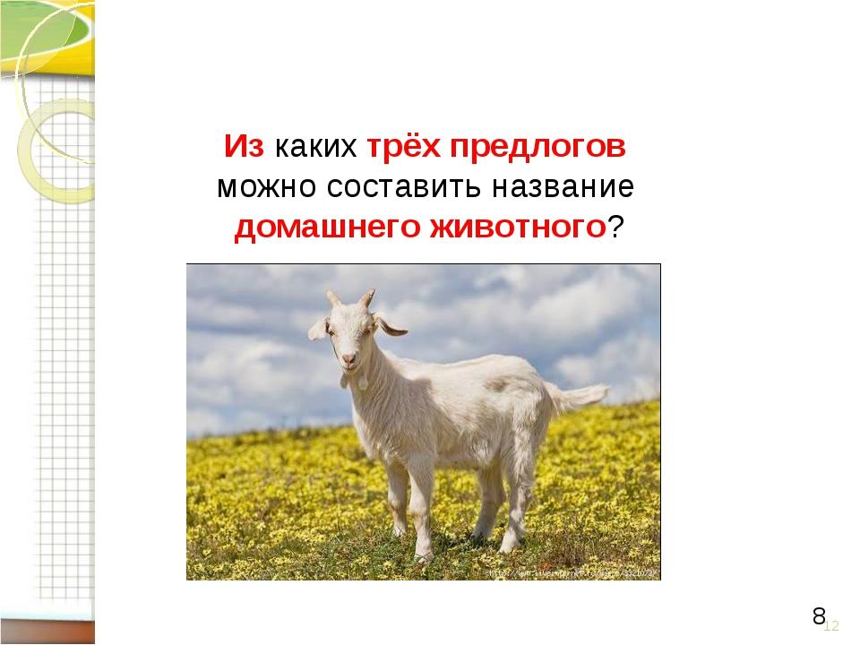 * 8 Из каких трёх предлогов можно составить название домашнего животного?