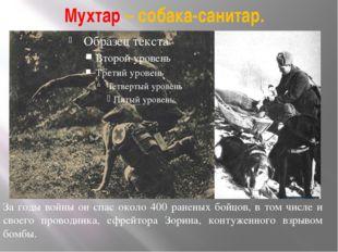 Мухтар – собака-санитар. За годы войны он спас около 400 раненых бойцов, в то