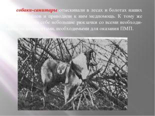 — собаки-санитары отыскивали в лесах и болотах наших раненых бойцов и привод