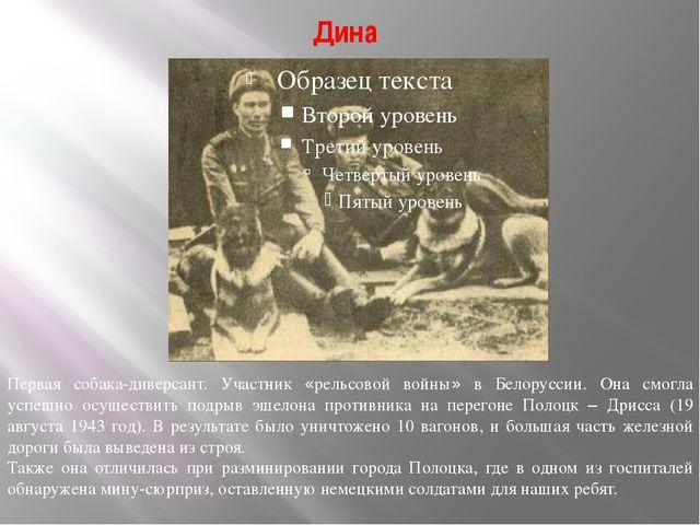 Дина Первая собака-диверсант. Участник «рельсовой войны» в Белоруссии. Она см...