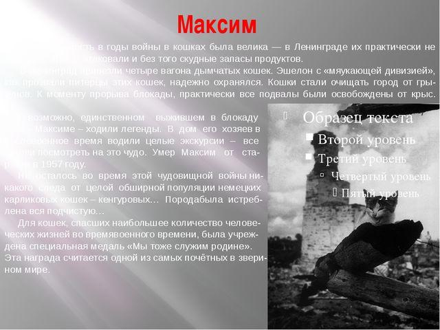 Максим Необходимость в годы войны в кошках была велика — в Ленинграде их прак...