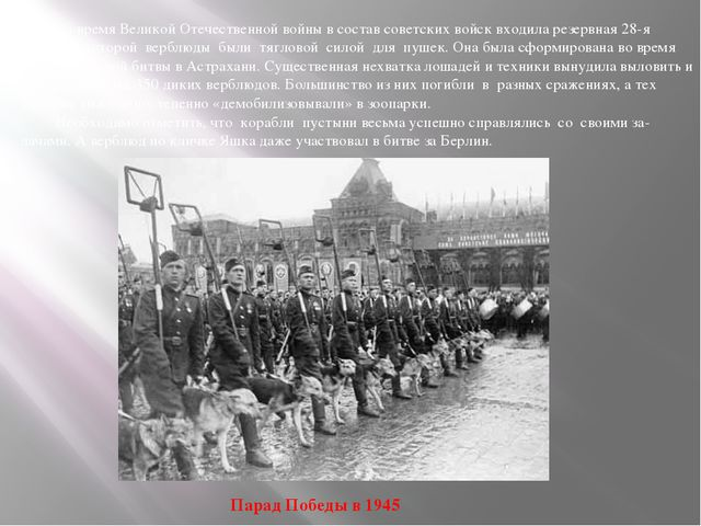 Во время Великой Отечественной войны в состав советских войск входила резерв...