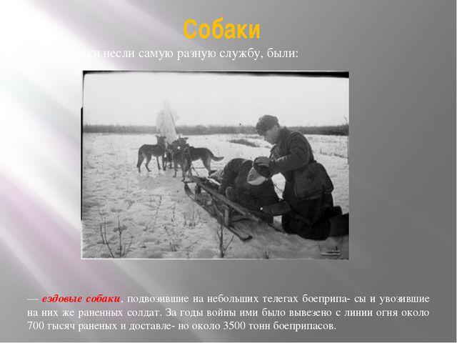 Собаки Наши собаки несли самую разную службу, были: — ездовые собаки, подвози...