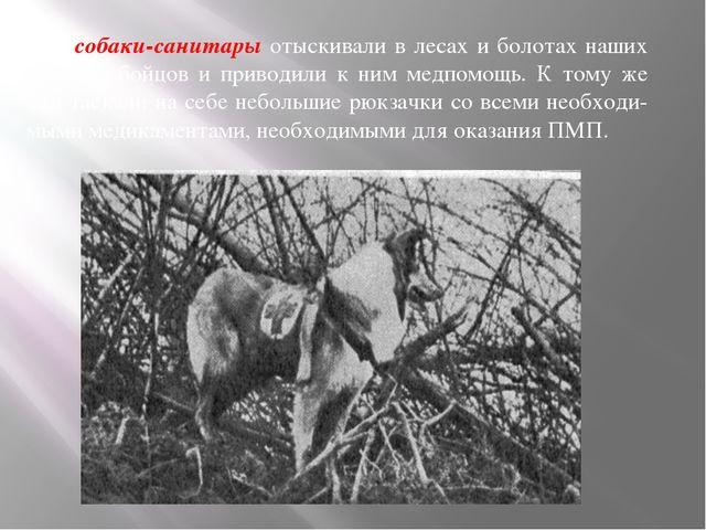 — собаки-санитары отыскивали в лесах и болотах наших раненых бойцов и привод...