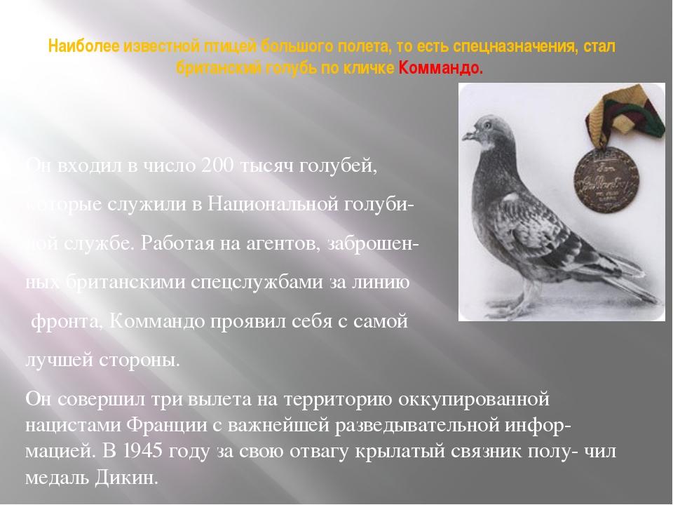 Наиболее известной птицей большого полета, то есть спецназначения, стал брита...