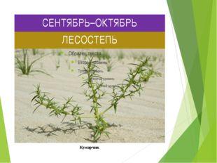 СЕНТЯБРЬ–ОКТЯБРЬ ЛЕСОСТЕПЬ Кумарчик Кумарчик или катун, также «киргизское пше